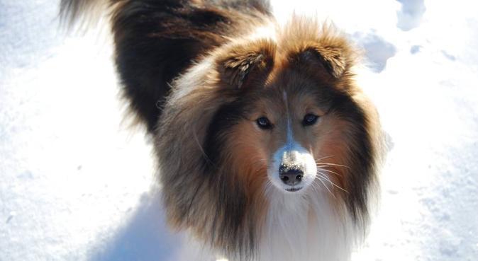 Kärleksfull och trygg hundälskare i Kvarngärdet, hundvakt nära Uppsala