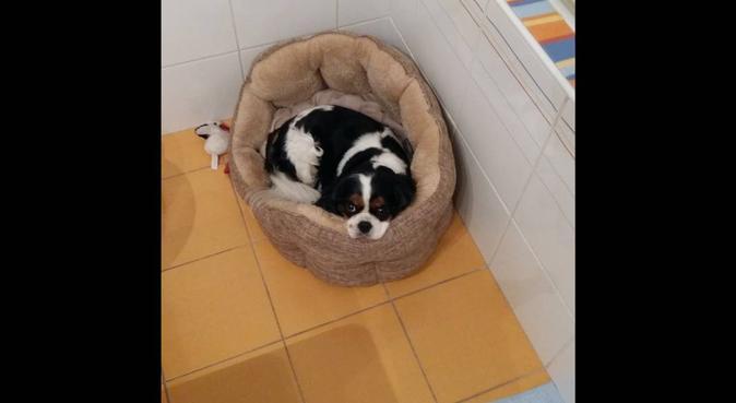 Le promeneur a l'écoute du chien, dog sitter à Chatou