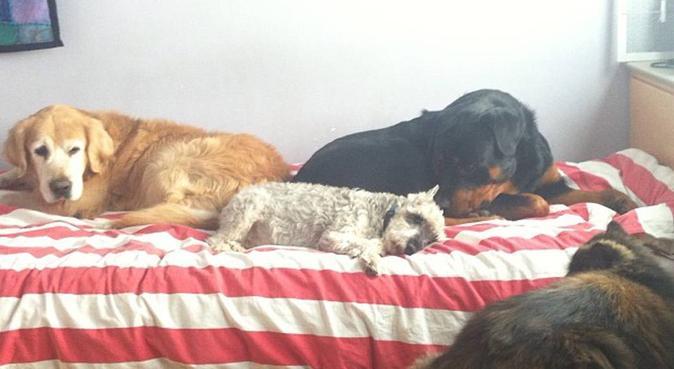 Cuidadora y paseadora de mascotas en Sant Cugat, canguro en Sant Cugat del Vallès