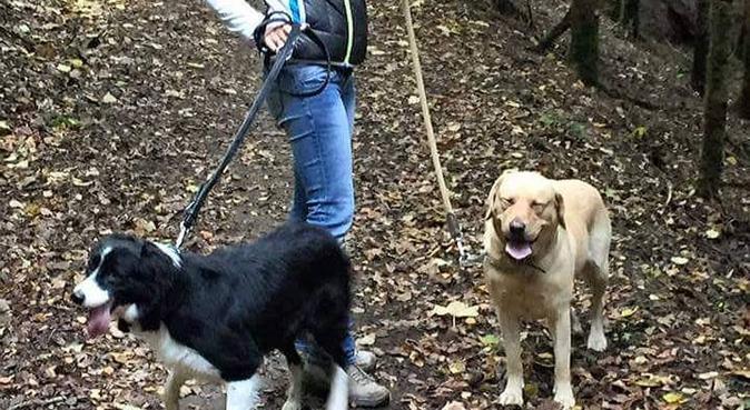 Coccole  passeggiate e un Po di educazione, dog sitter a Castenedolo