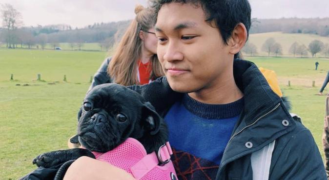 Dog best friend, dog sitter in Brighton, UK