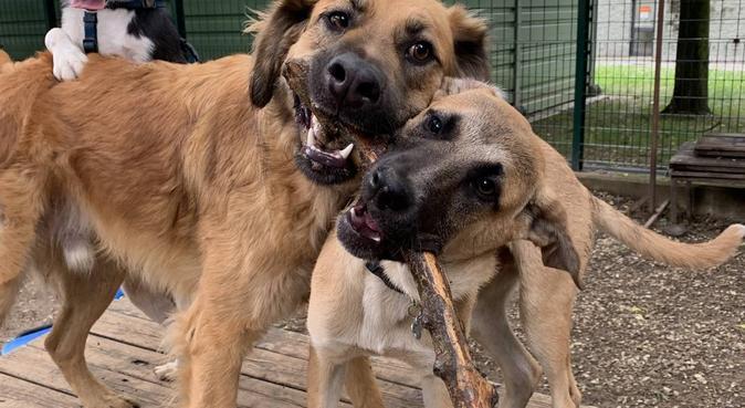 Coccole e passeggiate assicurate per i vostri cani, dog sitter a Florence