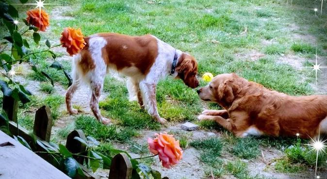 Doggylandia el lugar soñado por sus mascotas 🐶, canguro en Puerto De Santa Maria