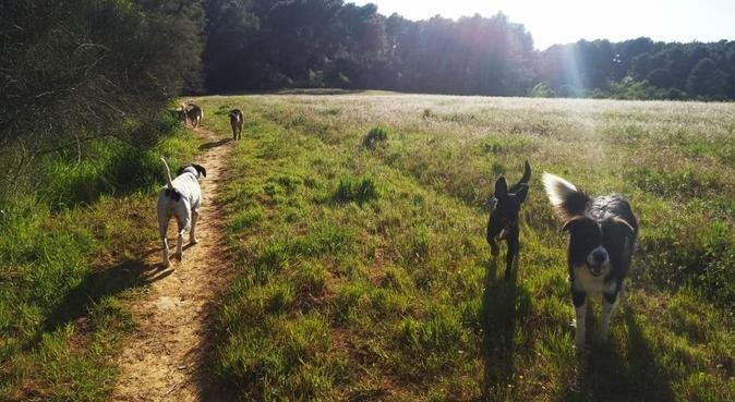 🐾Casa de colònies al bosc!Felicitat absoluta😍🐾, canguro en Cerdanyola