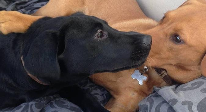 Home from home care with love and cuddles., dog sitter in Colchester