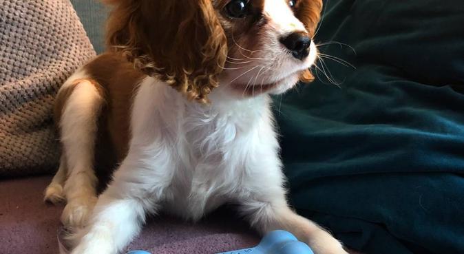 PAWSOME: Walks, Day Care & Boarding Wolverhampton, dog sitter in Wolverhampton
