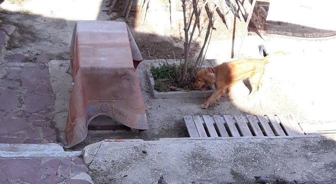 Cuidado profesional para tu compañero animal., canguro en picassent