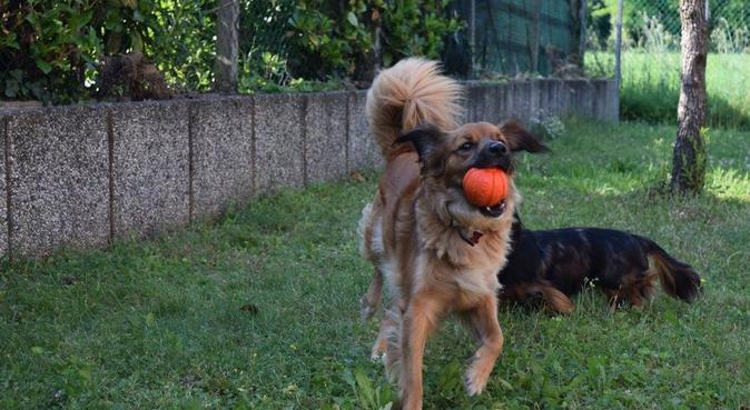 Massima cura e sicurezza per il vostro cane, dog sitter a Venezia