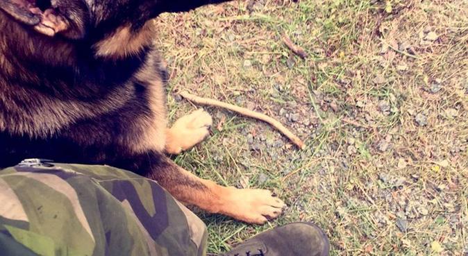 Fyrbenta Vänner i Göteborg 🐾 Mycket Kärlek & Lek, hundvakt nära Göteborg