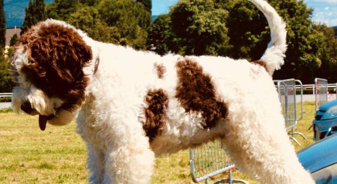 Tanto amore e Passione da dedicare al tuo cane, dog sitter a Corciano, PG, Italia