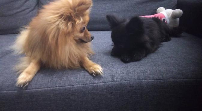 Garderie pour petits chiens., dog sitter à Rouen