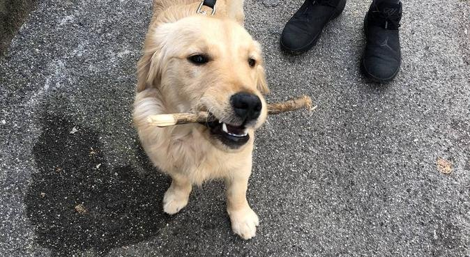 Divertenti passeggiate e adorabili coccole 🐶, dog sitter a Mestre