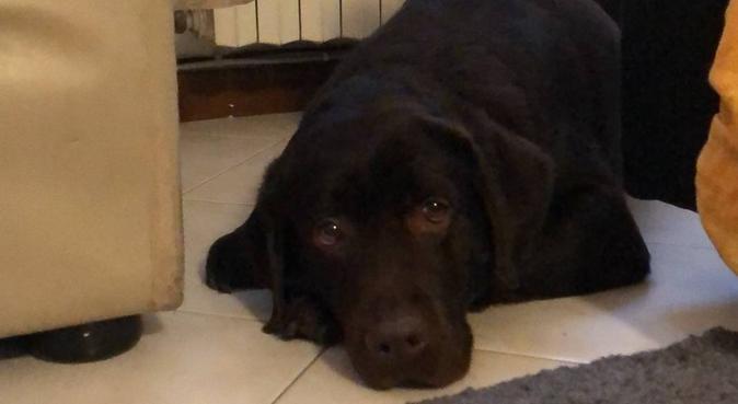 Tante Coccole e amore per i nostri amici a 4 zampe, dog sitter a Bologna, BO, Italia