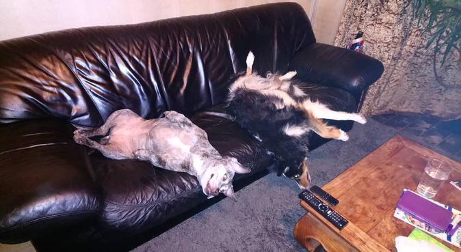 Super Fluffy Animals, dog sitter in Lytham St Annes