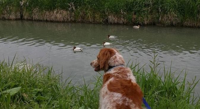 Coccole, sicurezza e passeggiate, dog sitter a Parma, PR, Italia