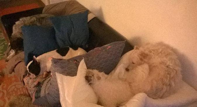 Au Ptit Nid Douillet, dog sitter à noisy-le-roi