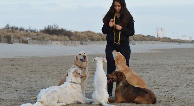 La maison de vacances de vos chiens à Montpellier., dog sitter à Montpellier