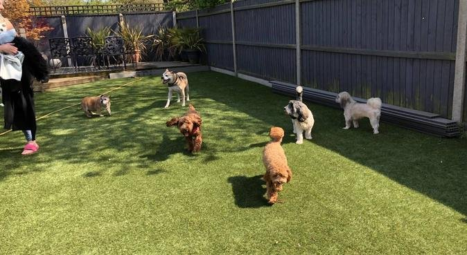 Cosy home for happy dogs!, dog sitter in Norwich