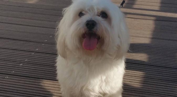 Une dogsitter très sympa, dog sitter à Levallois-Perret