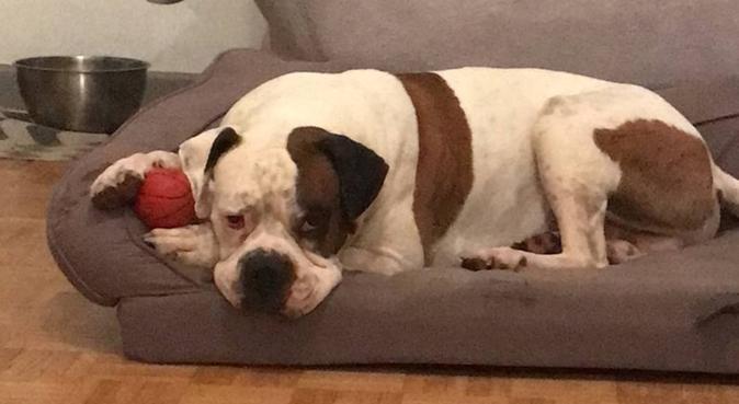 beaucoup de câlins et de balades, dog sitter à Valence, France