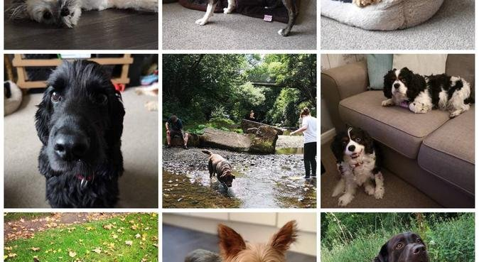 Home from home for the furry part of your family, dog sitter in Manchester