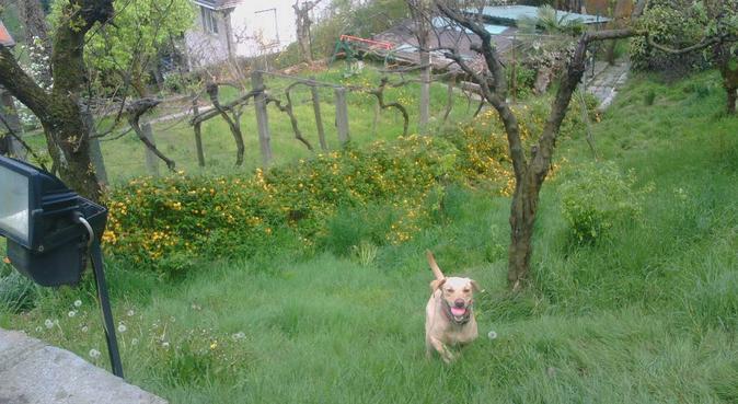 Il tuo amico a 4 zampe nel verde della collina, dog sitter a torino