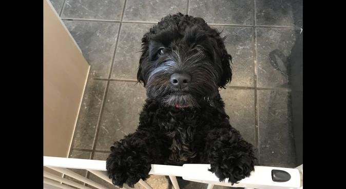 Family home full of doggy love, dog sitter in Chelmsford