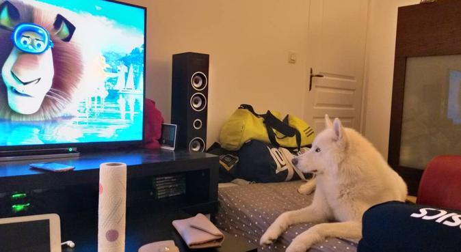 Un couple débordant d'amour pour nos amis à poil, dog sitter à Avrillé