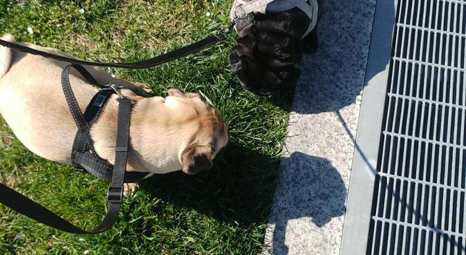 Amore,coccole, divertimento, responsabilita'!!, dog sitter a Milano