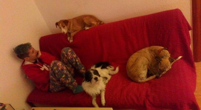 Villapeluda - el sofá es siempre primero del perro, canguro en BADALONA