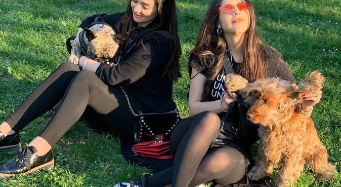Tante passeggiate con i miei amici a quattro zampe, dog sitter a Roma, RM, Italia