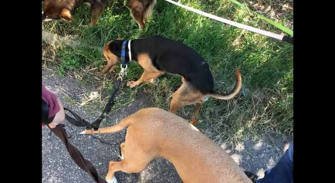 La vacanza giusta per i tuoi amici 4zampe, dog sitter a Roma