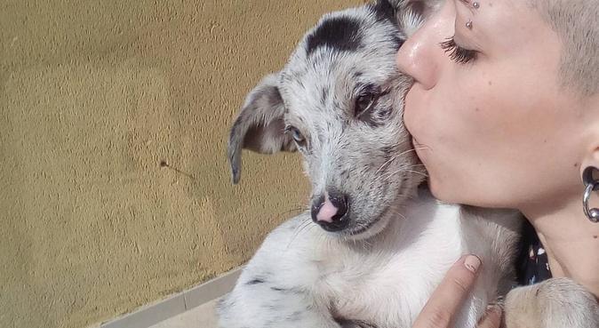 Offresi passeggiate, compagnia, cura e coccole!, dog sitter a Palermo
