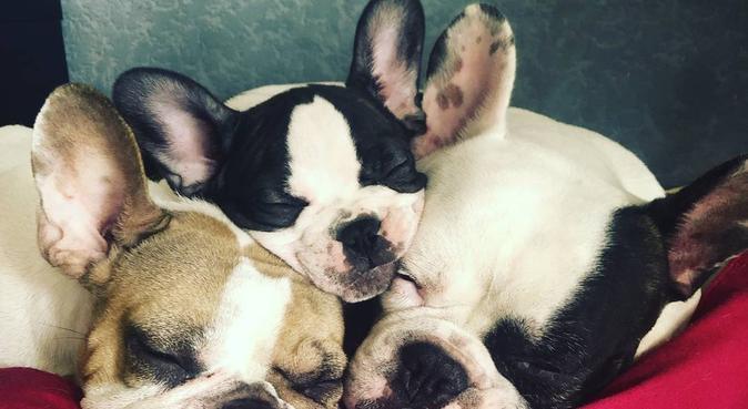 15ans d'expériences et de passion pour les chiens, dog sitter à Strasbourg