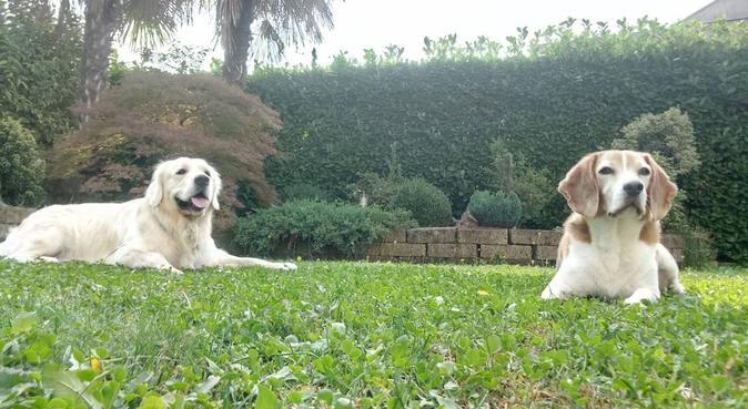 Educatore Cinofilo: Come se fossero a casa loro, dog sitter a Pedrengo
