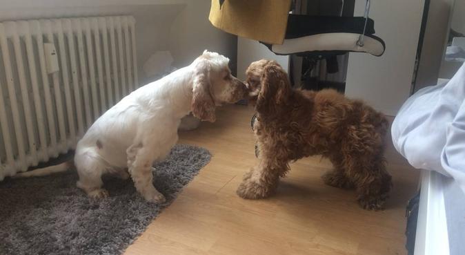 Garde de vos amours, dog sitter à Lille