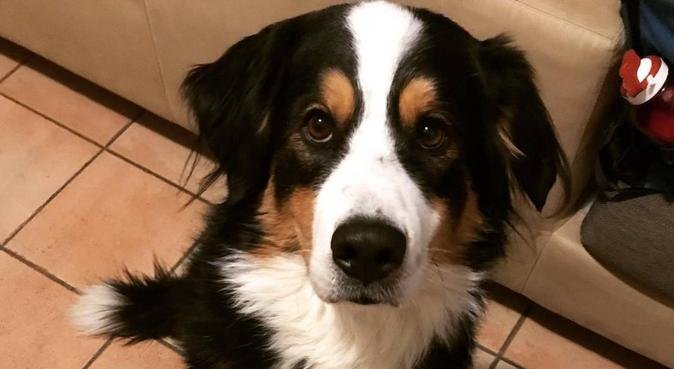 Un cane stanco è un cane felice, dog sitter a Padova