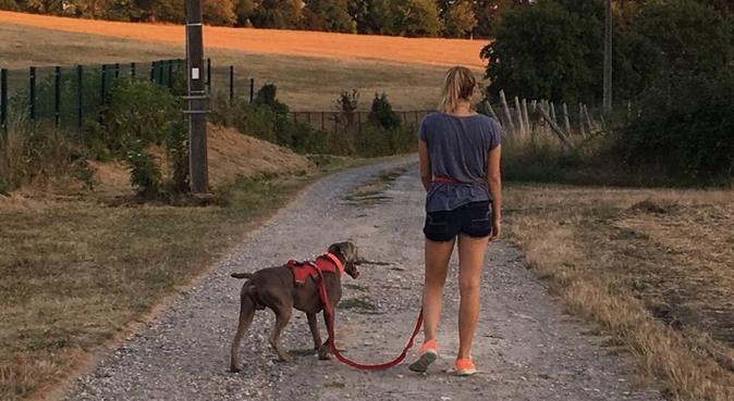 Vacances pour chiens à la petite plaine !, dog sitter à FONDETTES