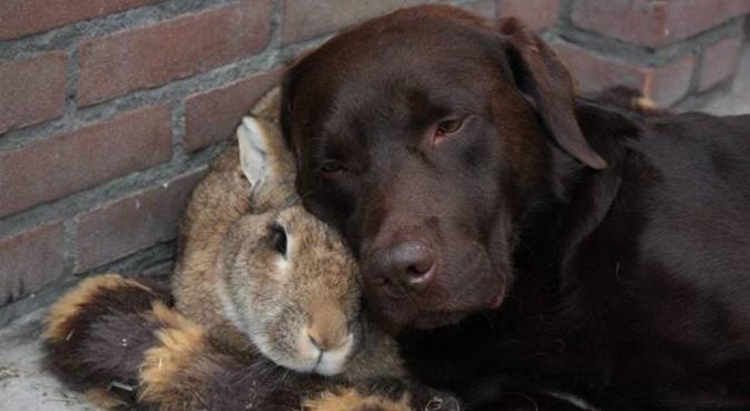 Sammie hondenuitlaatservice, hondenoppas in Amsterdam
