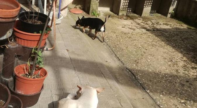 Relax e coccole, dog sitter a Roma
