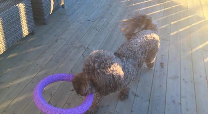 Gleder meg til fine turer med din hund :-), hundepassere i Moss