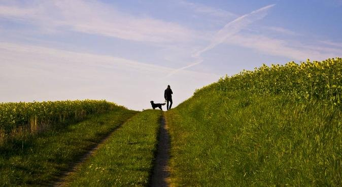 Jonatan passar gärna din hund!, hundvakt nära Uppsala, Sverige