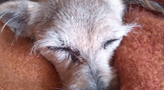 Cuidaré de tu perro como cuidaría del mío!, canguro en Villanueva y Geltrú
