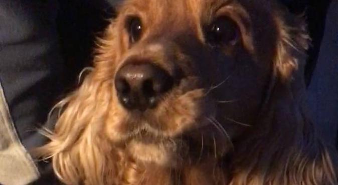 Kärleksfull hundpassning Vasastan, hundvakt nära Stockholm