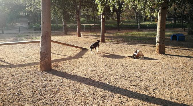 Hogar, dulce y perruno hogar, canguro en Córdoba