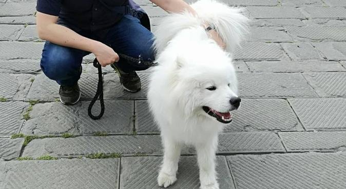 """Passeggiate, anche per cagnolini """"turisti"""" :-), dog sitter a Genova"""