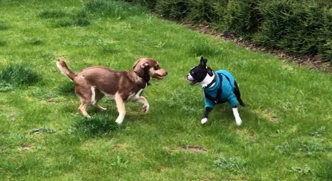Fun & Friendly Walking in Hainault/Chigwell, dog sitter in London