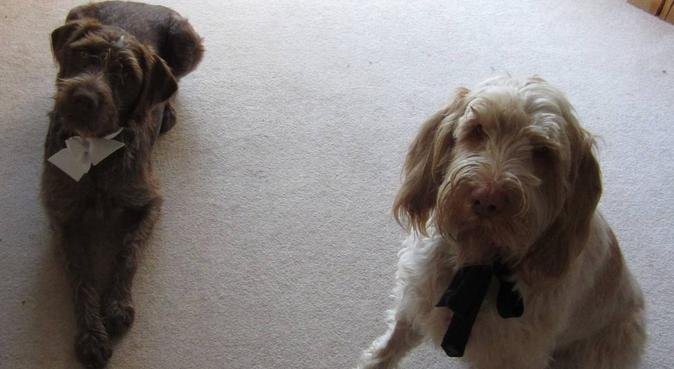 Tails and Treats, dog sitter in Slough