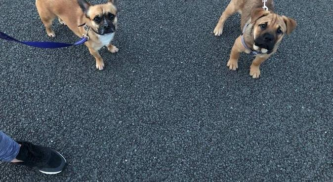 Paw Patrol: Pet sitting & dog walking in Surrey, dog sitter in Byfleet