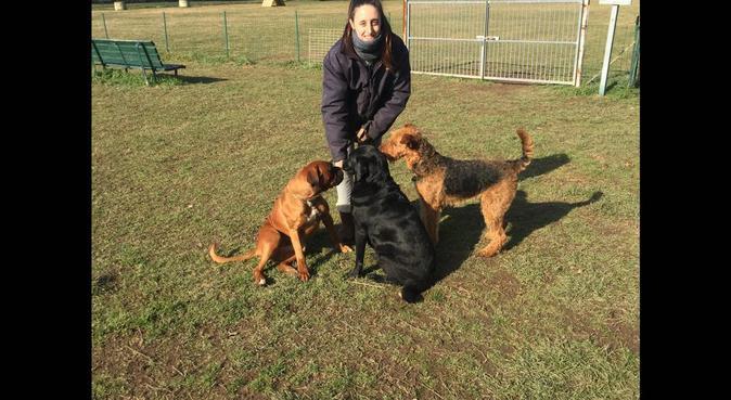 Una giornata ricca di svago e divertimento!, dog sitter a Cesano Maderno